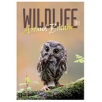 Wall Calendar - Wildlife around Britain
